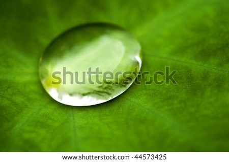 Water drop on lotus leaf closeup - stock photo