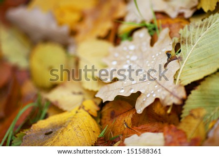 water drop on orange autumn leaf - stock photo