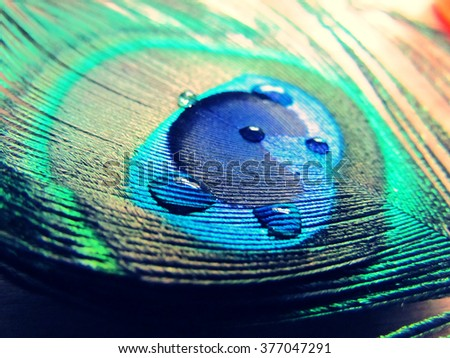 Water drop on peacock feather - stock photo