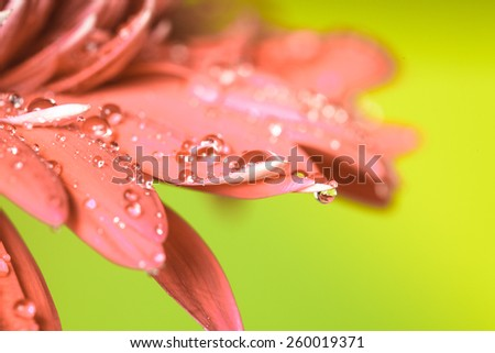 Water drop on the pink flower over green background - stock photo