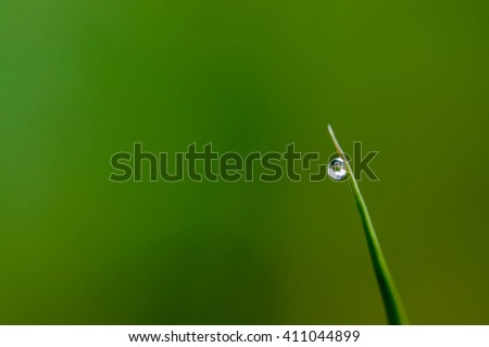 Water drop on tip of grass