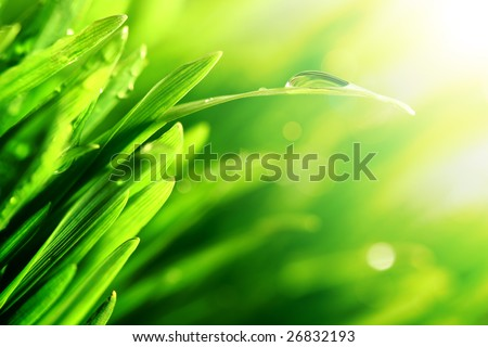 water drop shine - stock photo