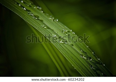 water droplet on leaf - stock photo