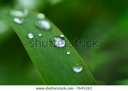 Water Droplet on the blade of grass