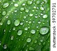 Water droplets, leaves - stock photo
