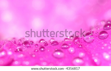 water droplets on a flower (shallow DOF) - stock photo