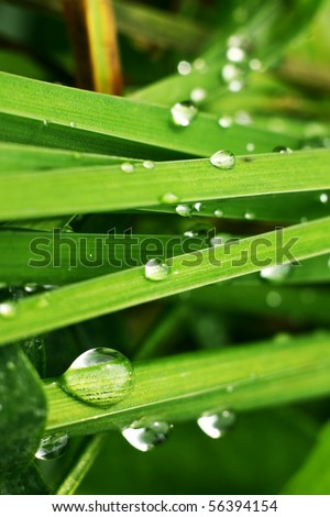 water droplets on a green grass - stock photo