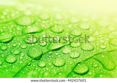 Water droplets on a leaf in morning light, beautiful natural background - stock photo