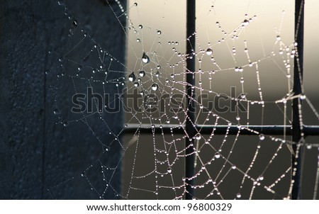 water droplets on a spider web - stock photo