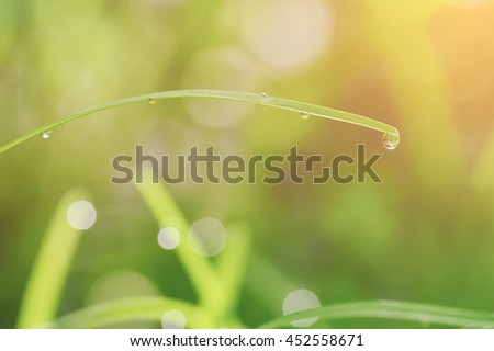 Water droplets on grass in morning light, beautiful natural background, Soft tone - stock photo