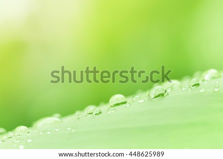 Water droplets on green leaf, Rain drops with sun rays. beautiful natural background. Soft focus - stock photo