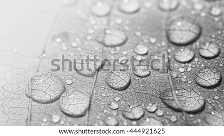 Water droplets on leaf . black and white tone, Beautiful natural background, Monochrome tone background