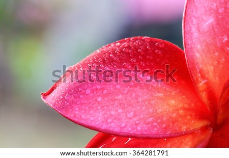 Water droplets on the petals of red flowers. - stock photo