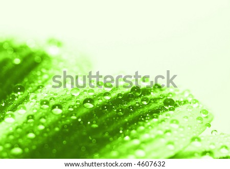 water droplets (shallow DOF)