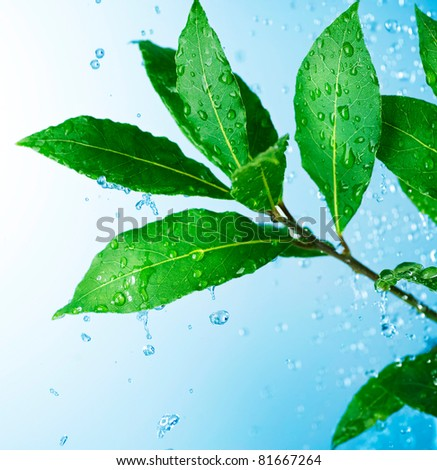 Water drops and Fresh Green Leaves - stock photo
