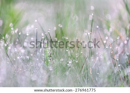 Water drops falling on lush green grass with shallow depth of field - stock photo