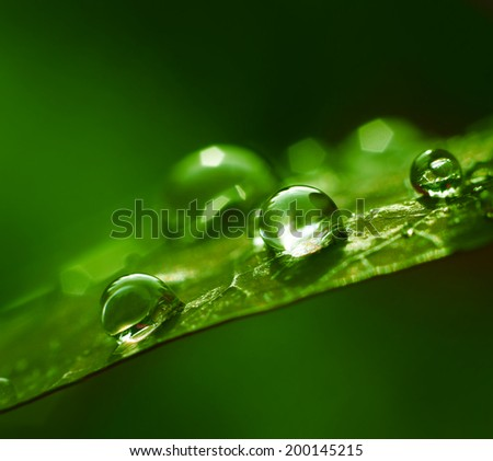 Water drops green summer season abstract - stock photo