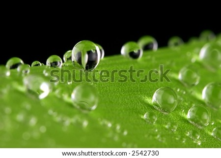 Water drops on a green amaryllis leaf - stock photo
