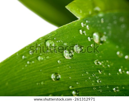 water drops on a green leaf  - stock photo