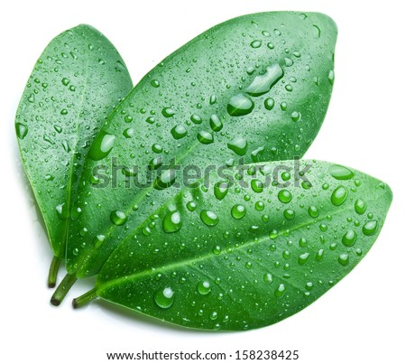 Water drops on a green leaf background. - stock photo