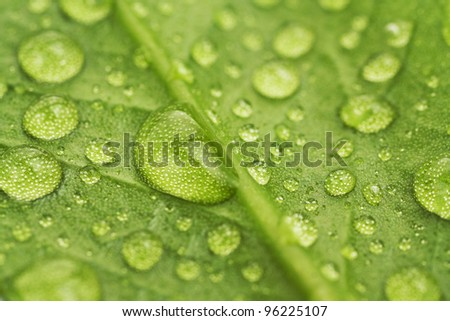 Water drops on a green leaf close up - stock photo