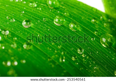 water drops on a green leaf isolated - stock photo