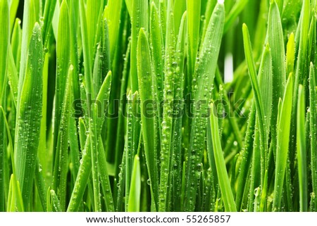 Water drops on blades of grass - stock photo