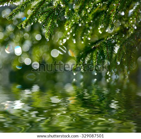 Water drops on fir tree reflected in the water. Shallow DOF - stock photo