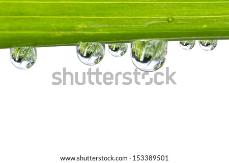 Water drops on fresh green leaf isolate on white - stock photo