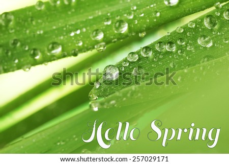 Water drops on fresh green leaves, close-up. Hello Spring concept - stock photo