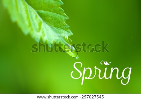 Water drops on fresh green leaves, on greenbackground. Hello Spring concept - stock photo