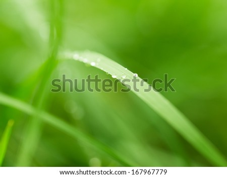 water drops on grass in nature. macro - stock photo