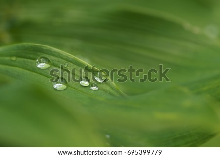 Water drops on green grass. Macro photo.
