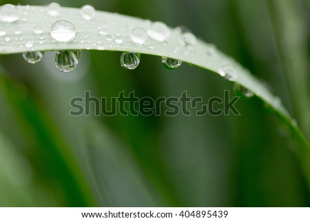 water drops on green leaves. macro photo. selective focus, shallow depth of field