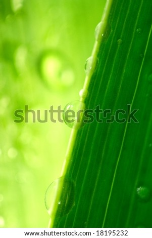 water-drops on green plant - stock photo