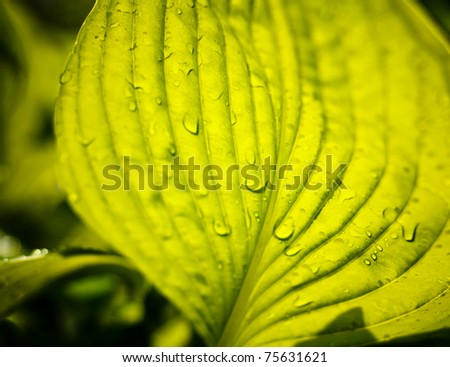 Water drops on green plant - stock photo