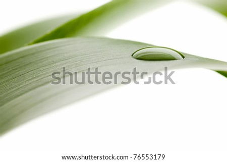 Water drops on  leaf - stock photo