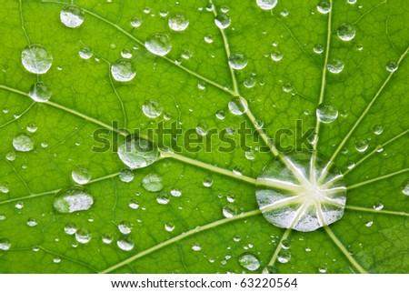 water drops on leaf - macro detail - stock photo