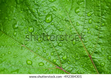 Water drops on leaf nature background