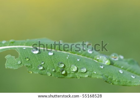 water drops on leaf (shallow depth of field)
