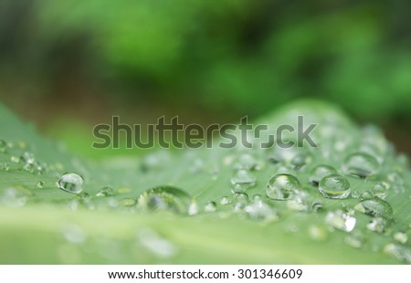Water drops on leaf with selective focus