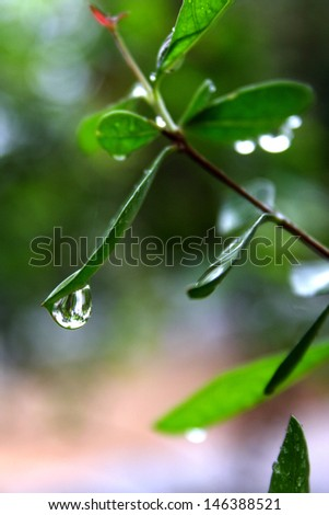 Water drops on leaves - stock photo