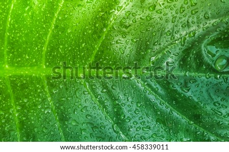 Water drops on leaves top view - stock photo