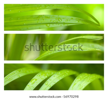 Water Drops on Palm Leaves Banner Set - stock photo