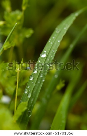 Water drops on plant in wild nature - stock photo