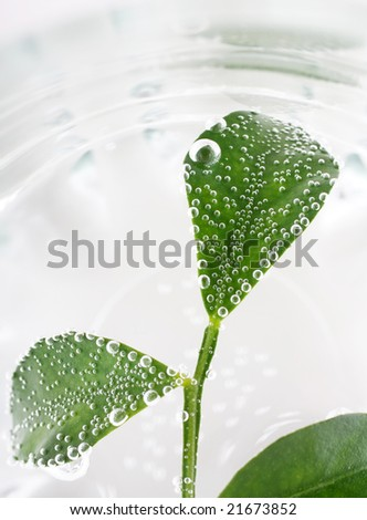 Water drops on plant leaf