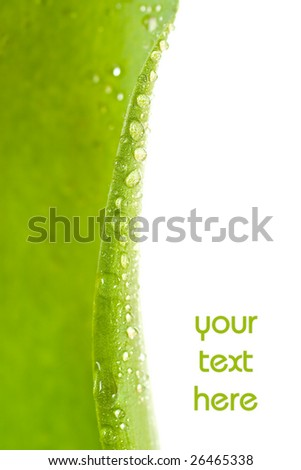 Water drops on plant leaf with lot of copy space. - stock photo