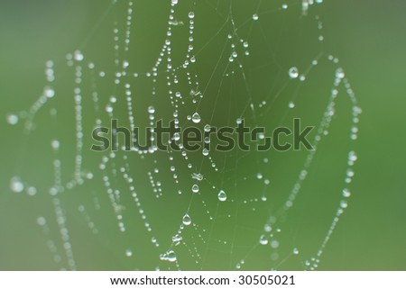 Water drops on spider web early morning