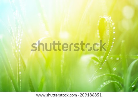 water drops on the green grass close up with soft focus - stock photo