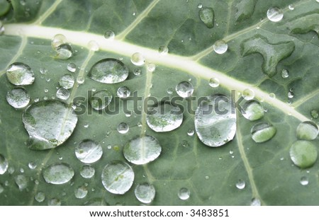 water drops on the leafs